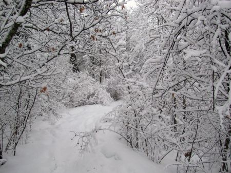 Free Beginning of Oberholtzer Trail