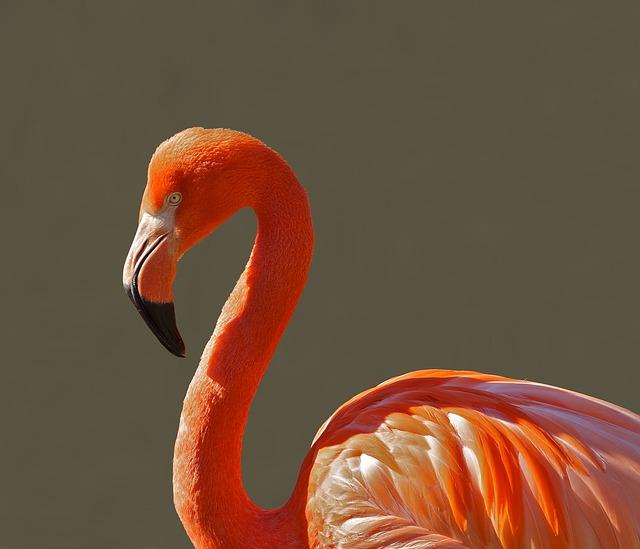 Free Photos:               flamingo bird pink tropical color macro close-up | David Mark