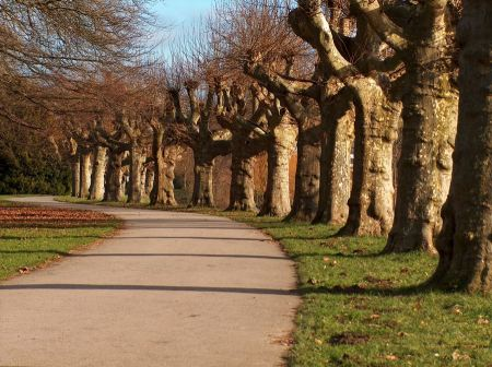 Free Road passing under the plane trees