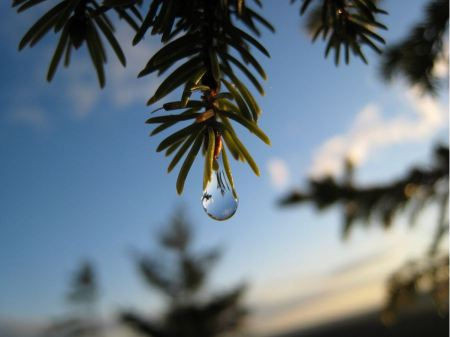 Free A spring drop of rain