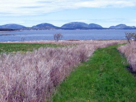 Free Baker Island Acadia National Park