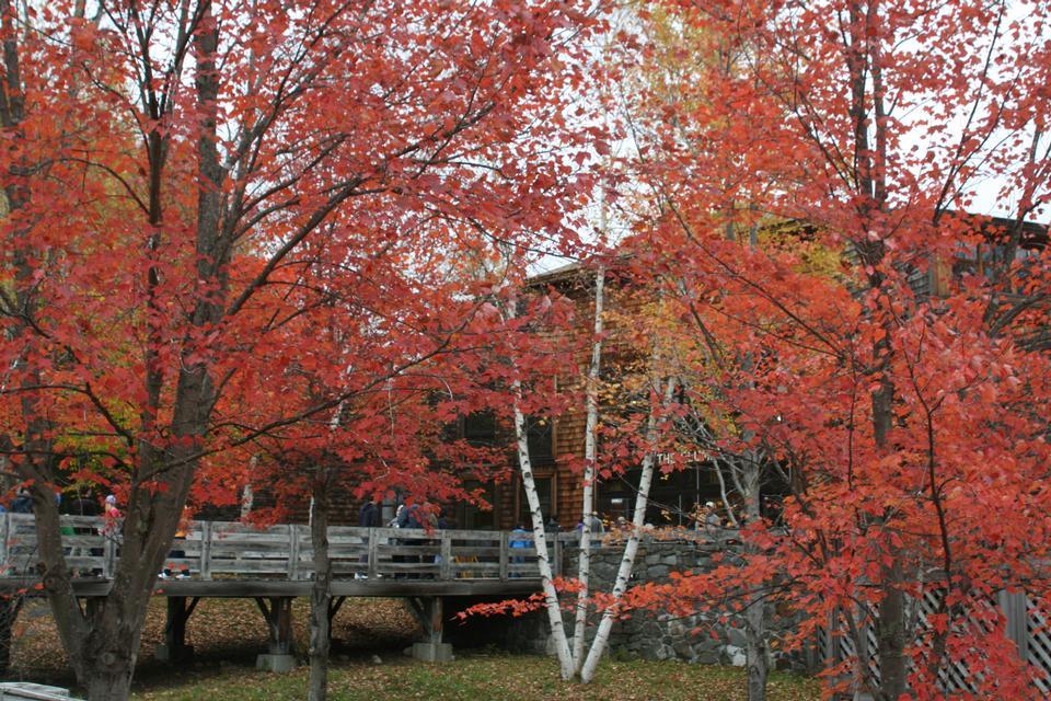 Free Autumn provides dramatic foliage White Mountains