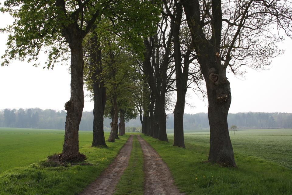 Free Bockel Castle in Rodinghausen