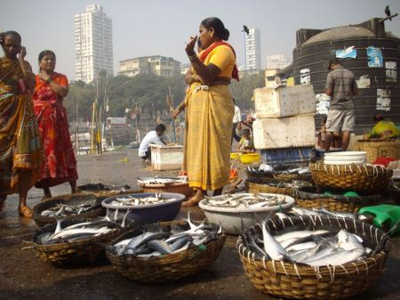 Free Fish Auction at Sassoon Docks in Mumbai