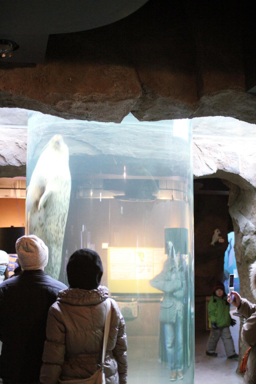 Free Asahikawa Travel: Asahiyama Zoo