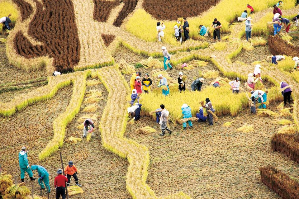 Free Paddy Field Art in Aomori Japan