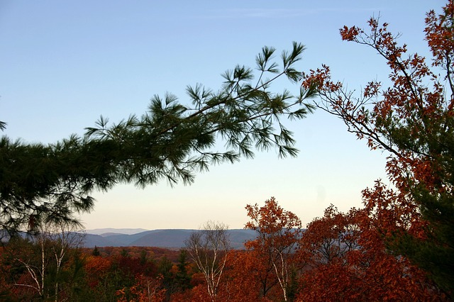Free vermont forest trees woods mountains nature
