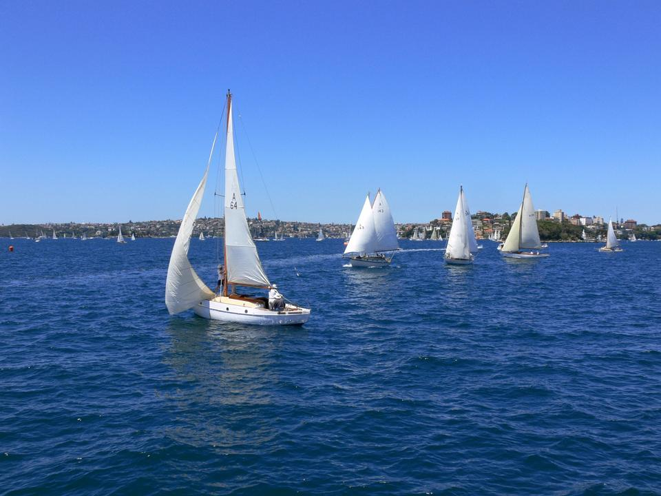 Free White sailed yachts sailing in Sydney harbour