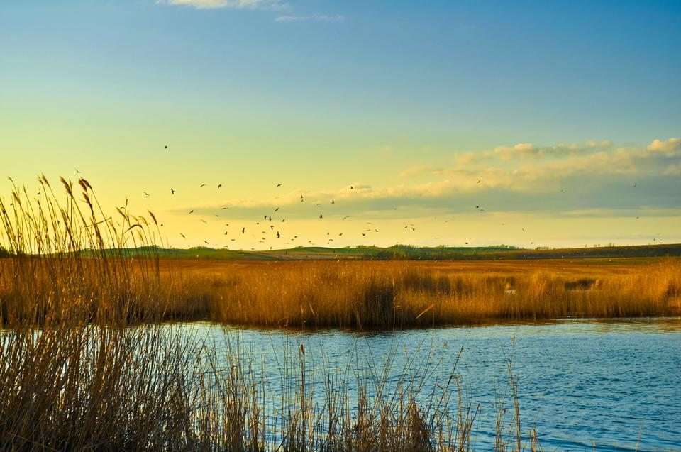 Free reed stalks and bird in the swamp against sunlight
