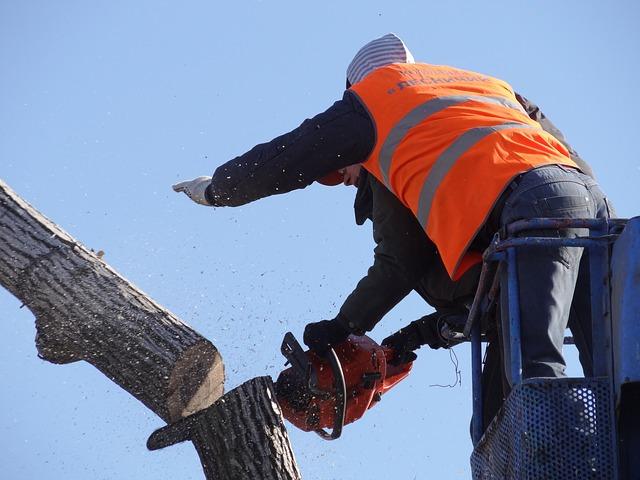 Free saw cut trees old tree felling