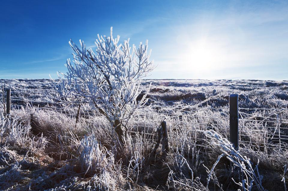Free Winter landscape with hoar frost and rising sun