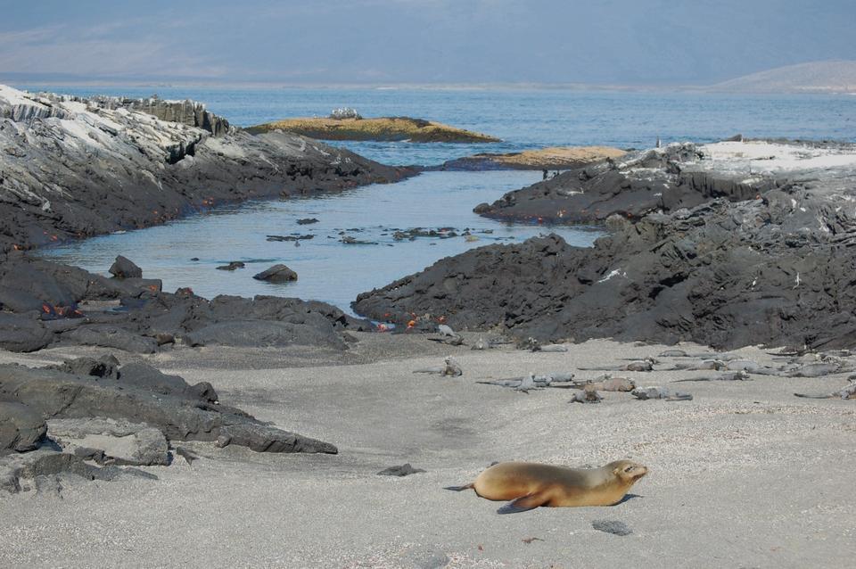Free Punta Espinosa Galapagos Islands Ecuador
