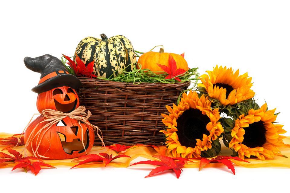 Free Photos: Hallowen pumkin with autumn harvest and sunflowers | publicdomain