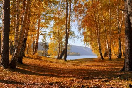 Free Autumn forest Landscape