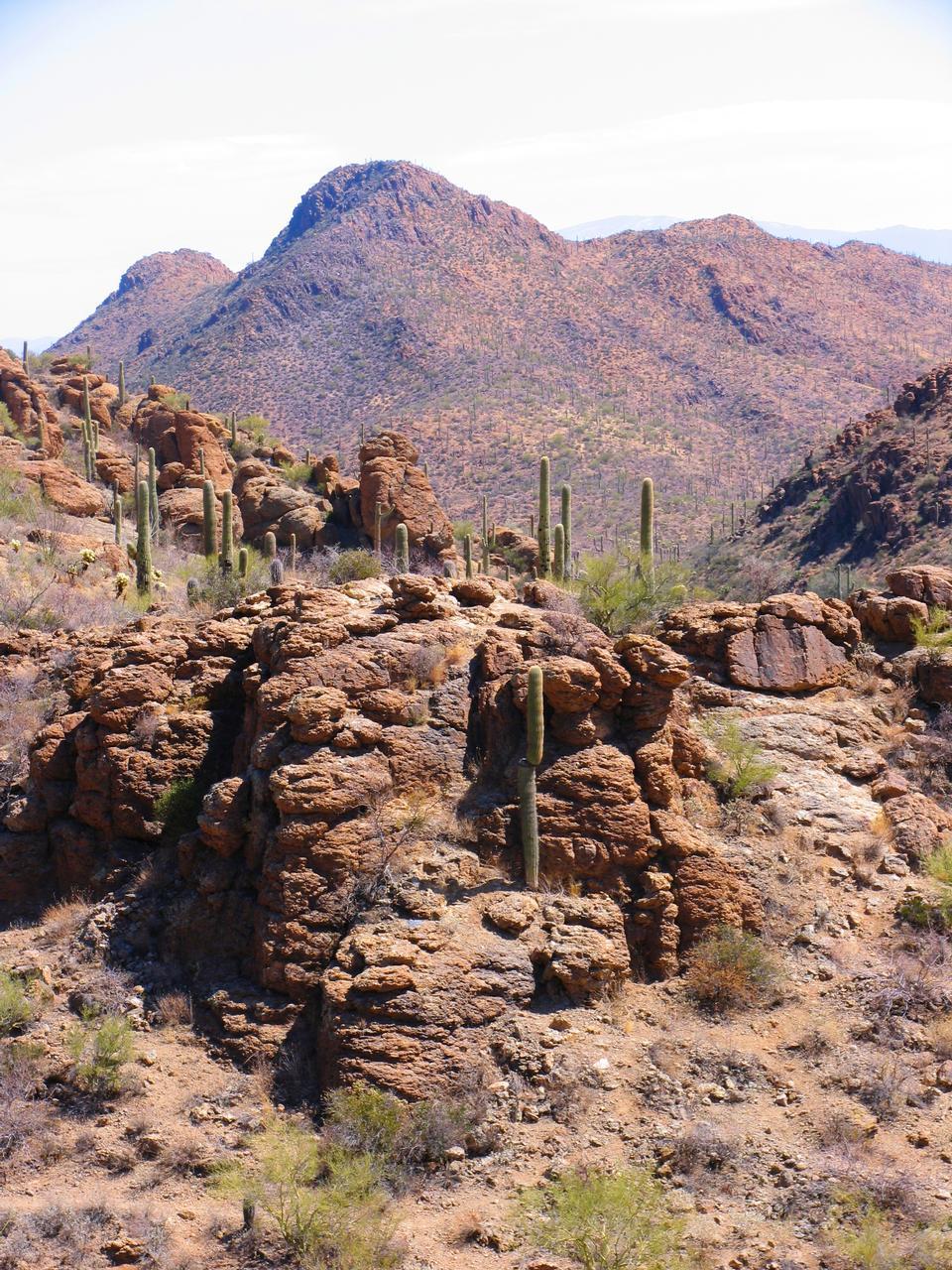 Free Saguaro cactus in the Gates Pass area of Arizona