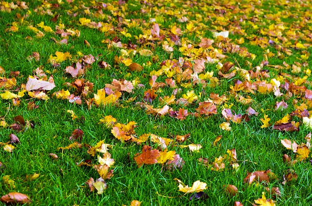 Free autumn season leaves color grass background