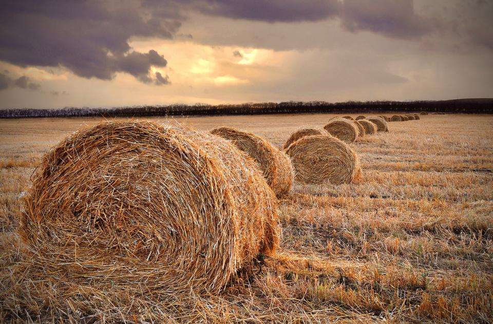 Free harvested straw and procured