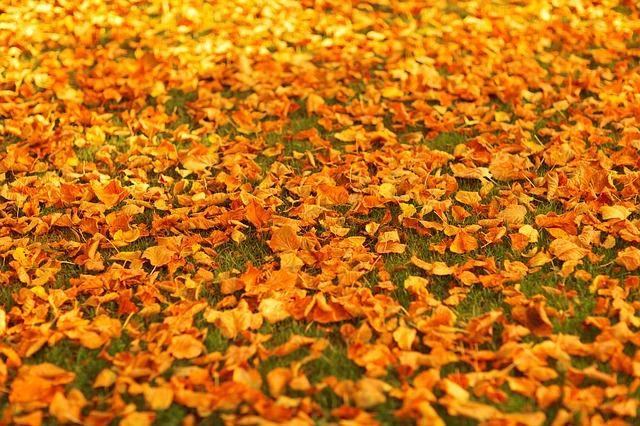 Free autumn fall foliage golden leaf leaves nature