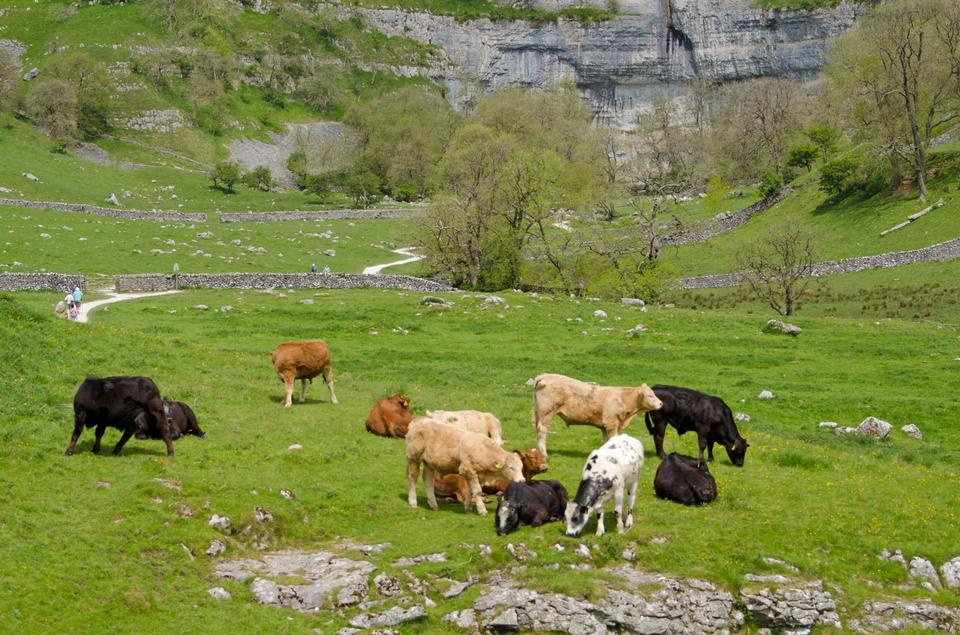 Free Yorkshire dales countryside in England