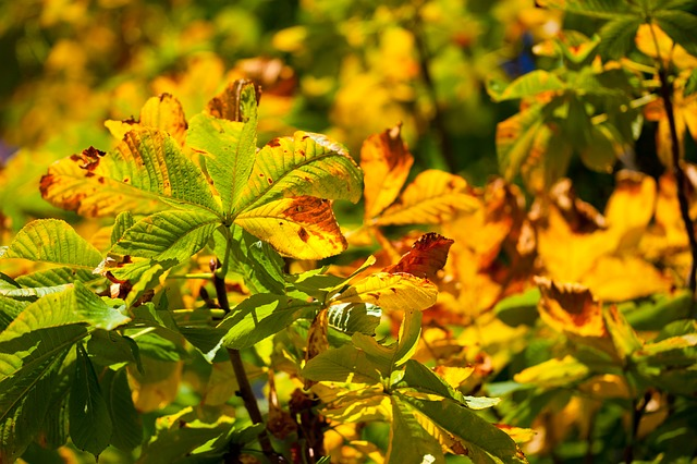 Free autumn brown color fall flora green