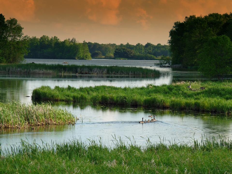 Free Calm Water Lake Wetland Wisconsin Landscape