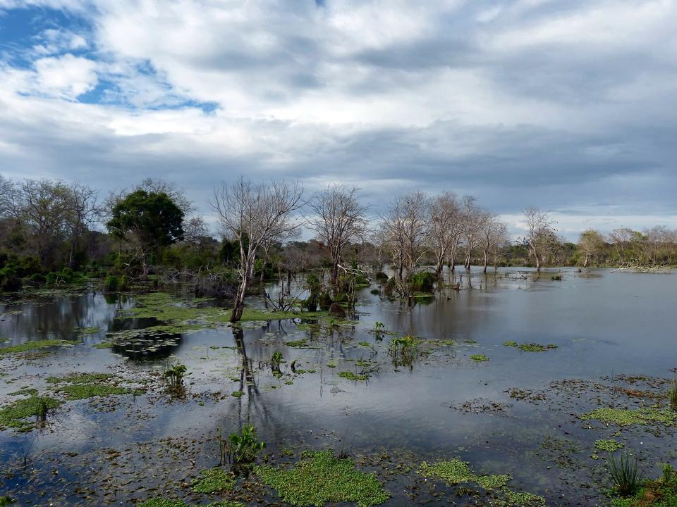 Free Sri Lanka Lake Lagoon