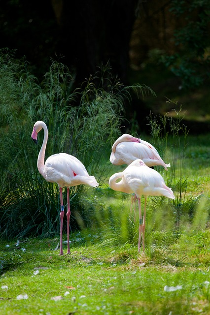 Free africa animal beak bird exotic fauna flamingo