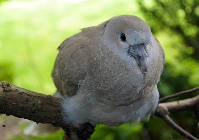 Free alive alone animal avian beak beautiful bird