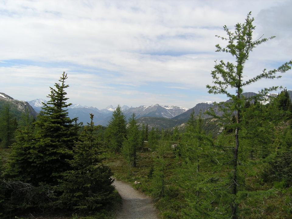 Free Hiking At Sunshine Meadows
