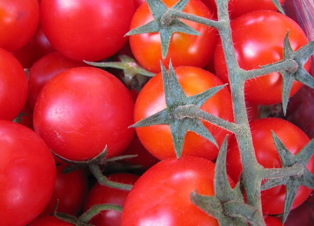 Free red tomatoes vegetables