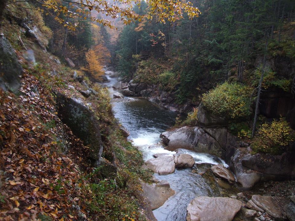 Free White Mountains Fall Foliage