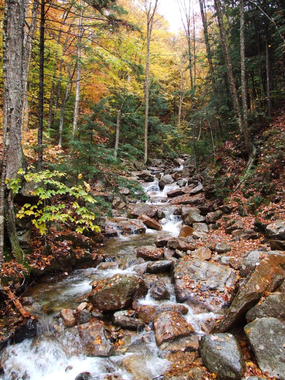 Free White Mountains Trail foliage