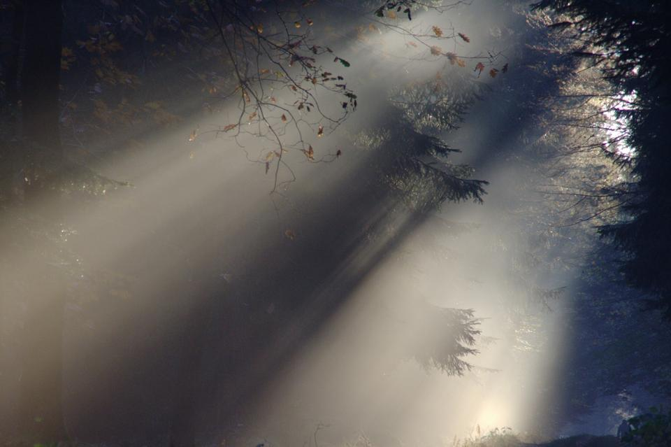 Free Sunbeam Fog Summer Nature Sunlight