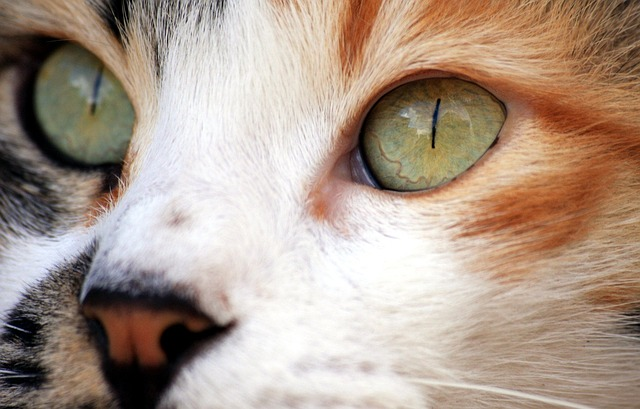 Free cat close-up eyes face