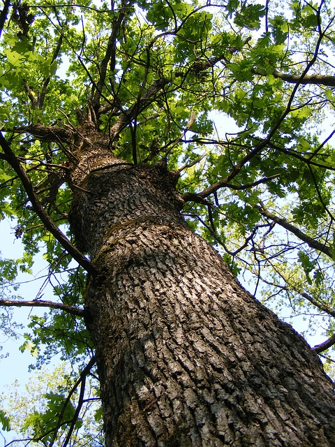 Free bark forest green oak tree trunk woods nature