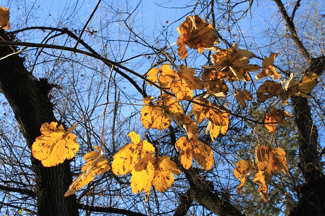 Free fall golden leaves orange red trees yellow