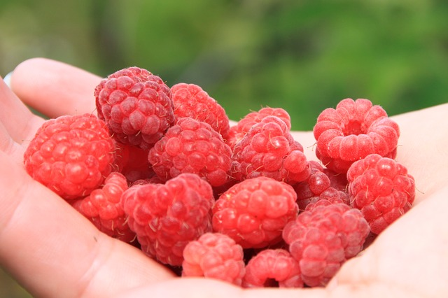 Free close-up fresh girl hands natural raspberry red