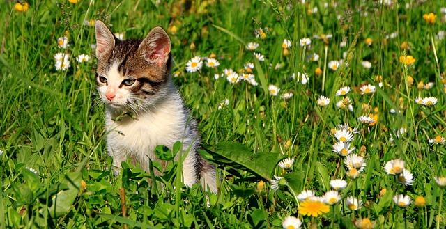 Free cats garden grass green kitty animals