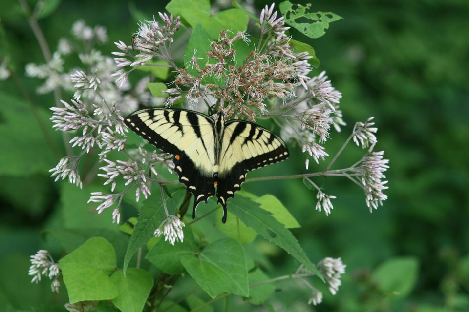 Free Butterfly on Flowers