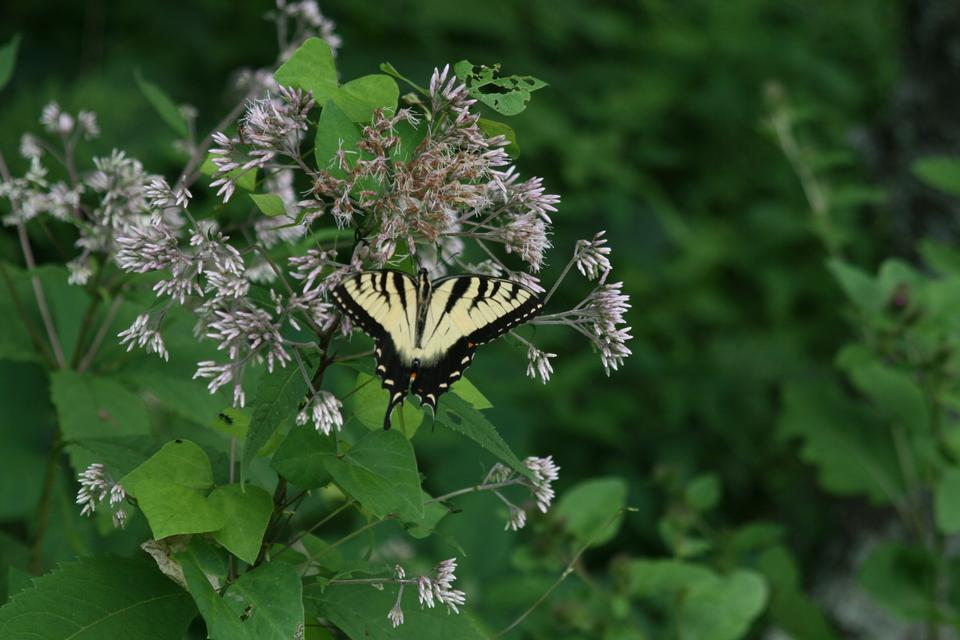Free Photos: Butterfly on Flowers | zettasnap