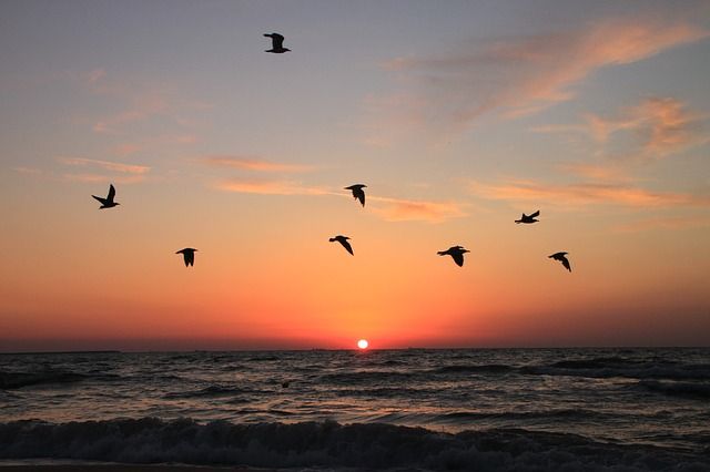 Free flying sea seagulls sunrise water