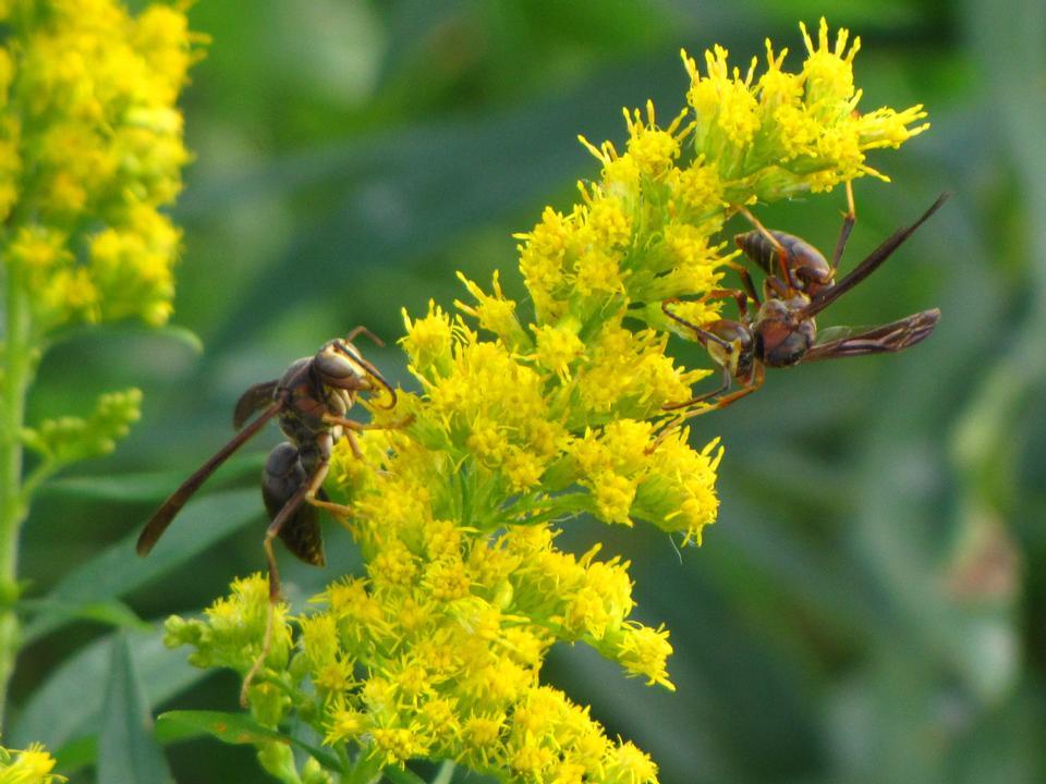 Free wasps 2