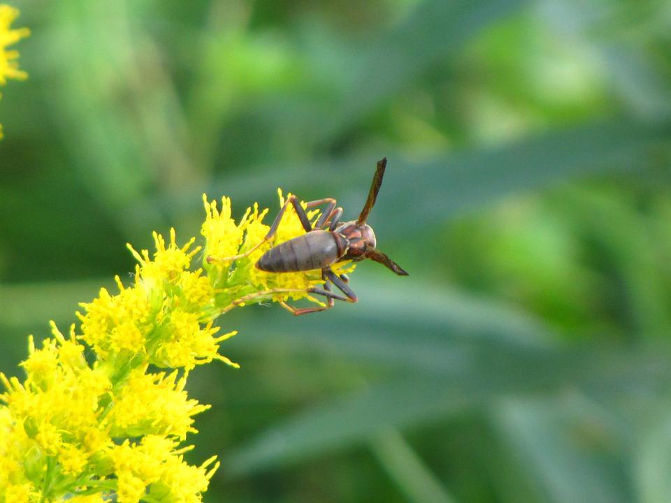 Free wasp