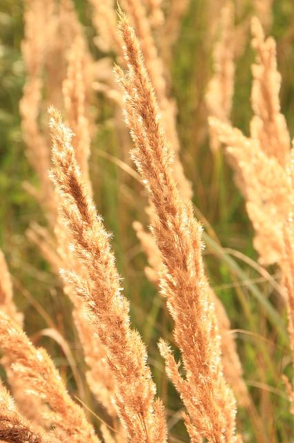 Free backlit ears flare grass sun sunlight sunny