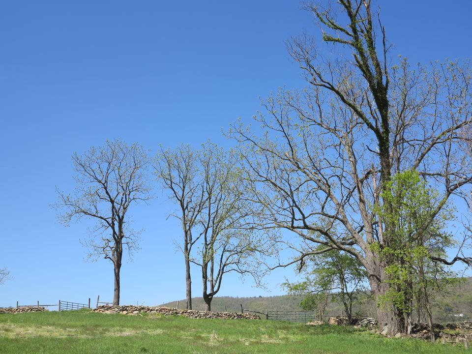Free Sky Meadows State Park