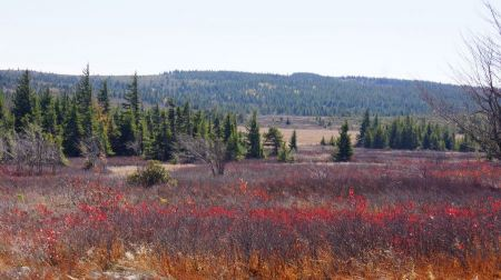 Free Fall Foliage in Dolly Sods
