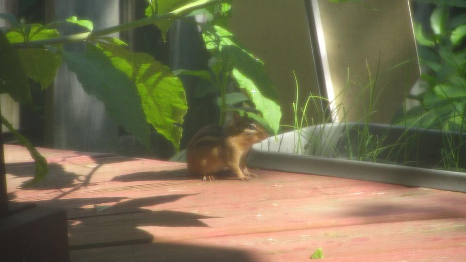 Free Squirrel