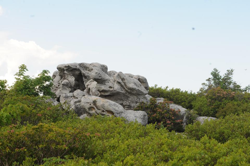 Free Bear Rocks - Dolly Sods WV