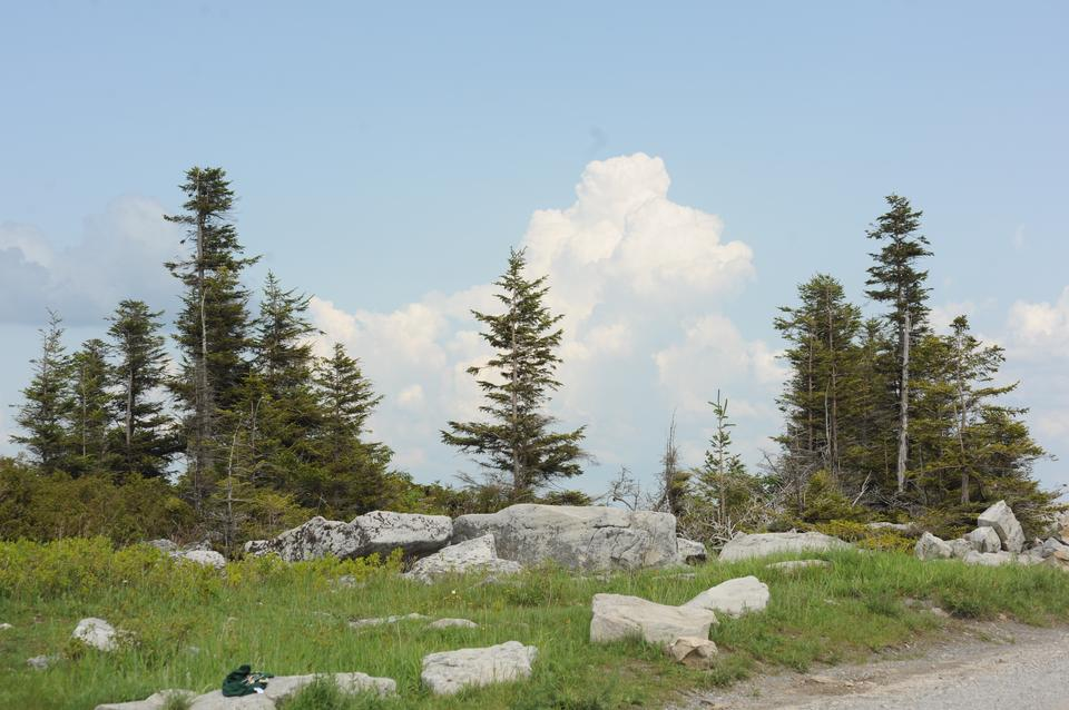 Free Dolly Sods North: Bear Rocks Trail Loop