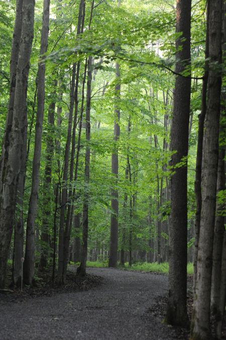 Free Sand Run Lake Trail West Virginia